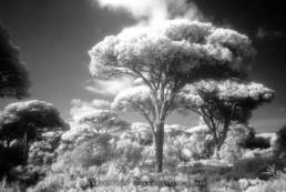 Paisagem Protegida da Arriba Fóssil da Costa de Caparica. Infra-Vermelhos com filme Kodak HIE © Carlos Dias 2001