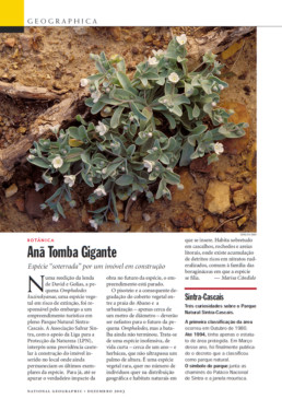 Omphalodes kuzinskyanae na revista National Geographic Portugal, 2003