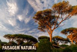 Paisagem Natural, #0061 © Carlos Dias 2010