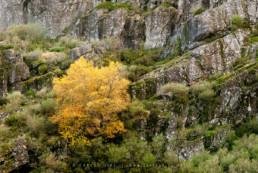 Parque Natural da Serra da Estrela #392 © Carlos Dias 2012