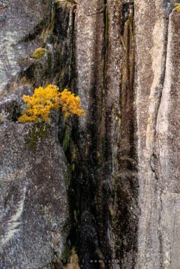 Árvore em penhasco, Parque Natural da Serra da Estrela #388 © Carlos Dias 2012