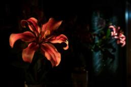 Flores, #8405 © Carlos Dias 2016