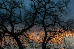 Árvores, Condeixa, #6038 | © Carlos Dias 2016