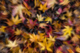 Folhas caídas, #358617 | © Carlos Dias Dez.2017