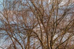 Árvores, Parque Verde, Coimbra, #0096 | © Carlos Dias 2015