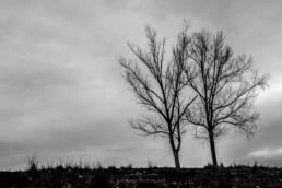 Árvores, #437818 | © Carlos Dias 2018