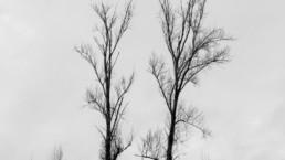 Dia Mundial da Poesia | Dia Mundial da Árvore | Formoselha, #437118 | © Carlos Dias Fev.2018
