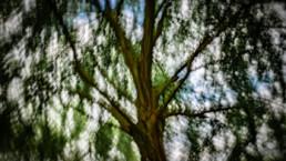 Árvore, Coimbra #762618 | © Carlos Dias 02.Jun.2018