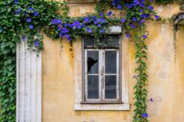 Casa, Coimbra #801518 | © Carlos Dias 24.Jun.2018