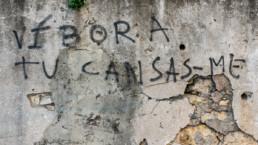 Víbora tu cansas-me, Coimbra #432418 | © Carlos Dias Fev.2018