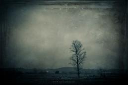 Árvore #436718-2 | © Carlos Dias Fev.2018