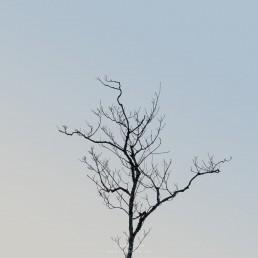 Árvore #193587 | © Carlos Dias Jan.2019