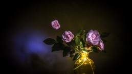 Light Painting | Rosas de Santa Teresinha #193063 | © Carlos Dias Abr.2019