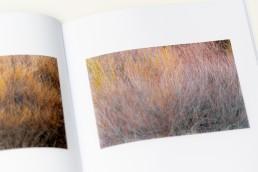 ARBÓREA | livro de fotografia de autor | © Carlos Dias 2020